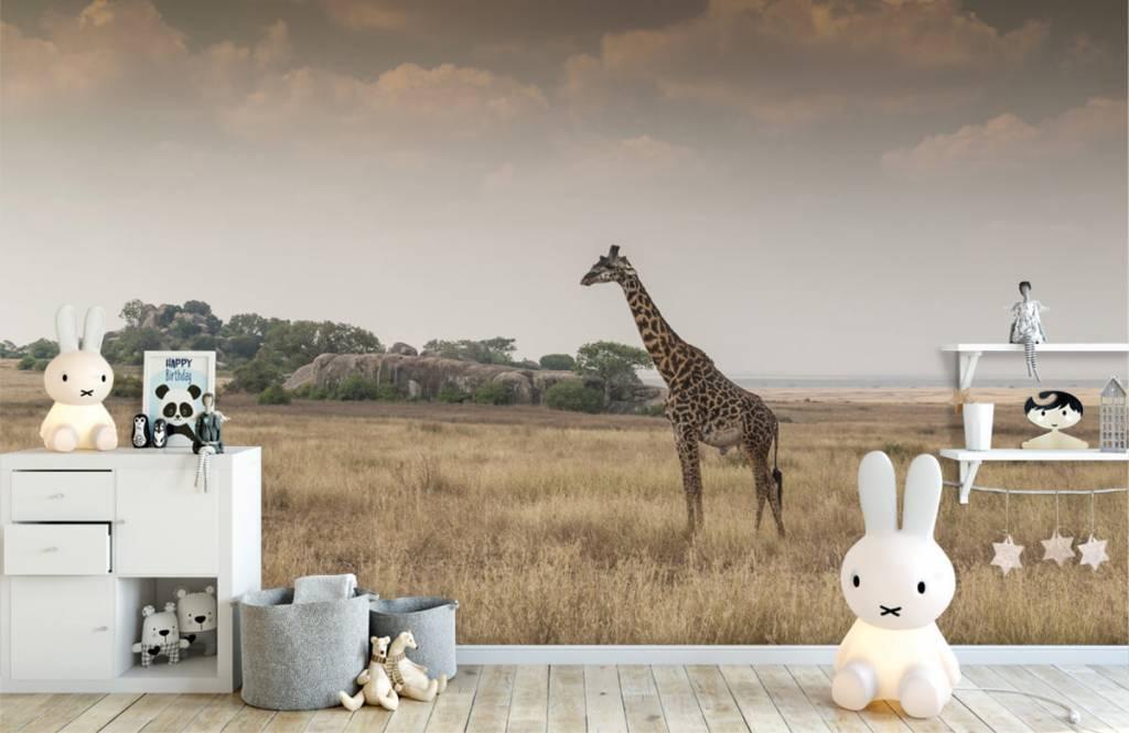 Dieren - Giraffe op een savanne - Slaapkamer 6