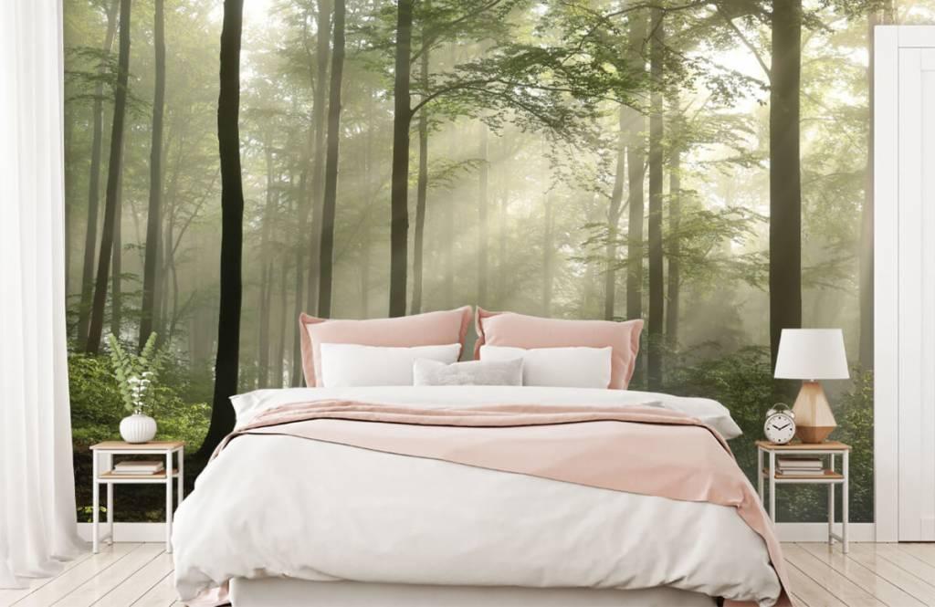 Bos behang - Groen bos in de mist - Slaapkamer 1
