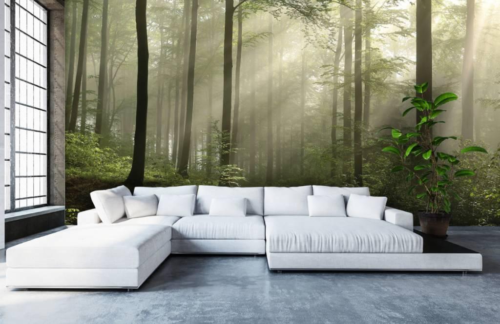Bos behang - Groen bos in de mist - Slaapkamer 5