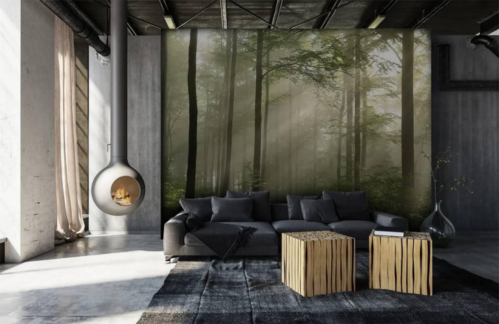 Bos behang - Groen bos in de mist - Slaapkamer 6