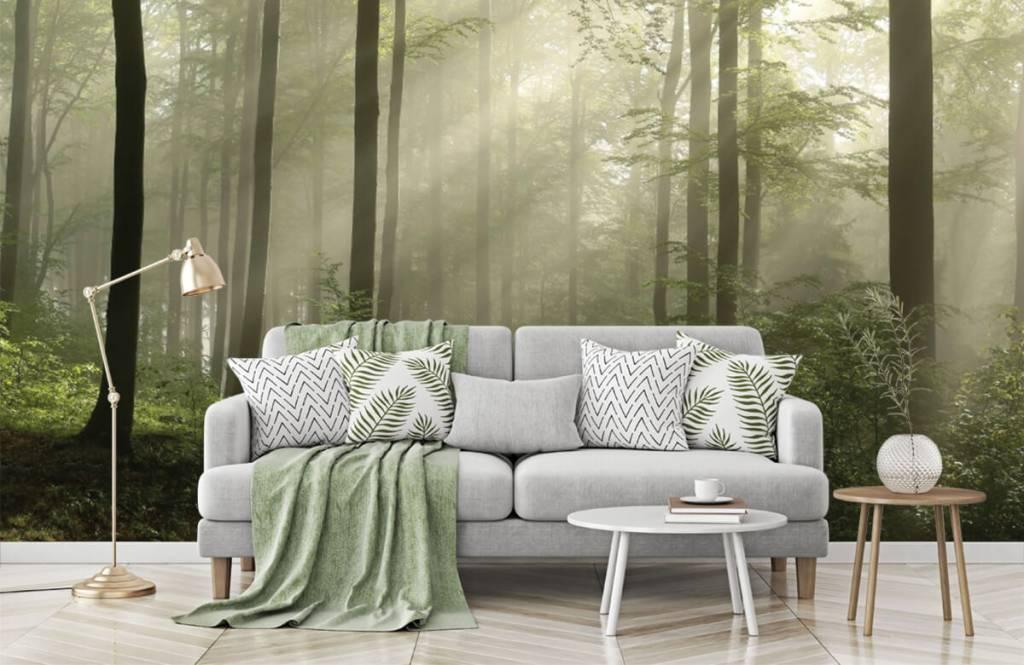 Bos behang - Groen bos in de mist - Slaapkamer 7