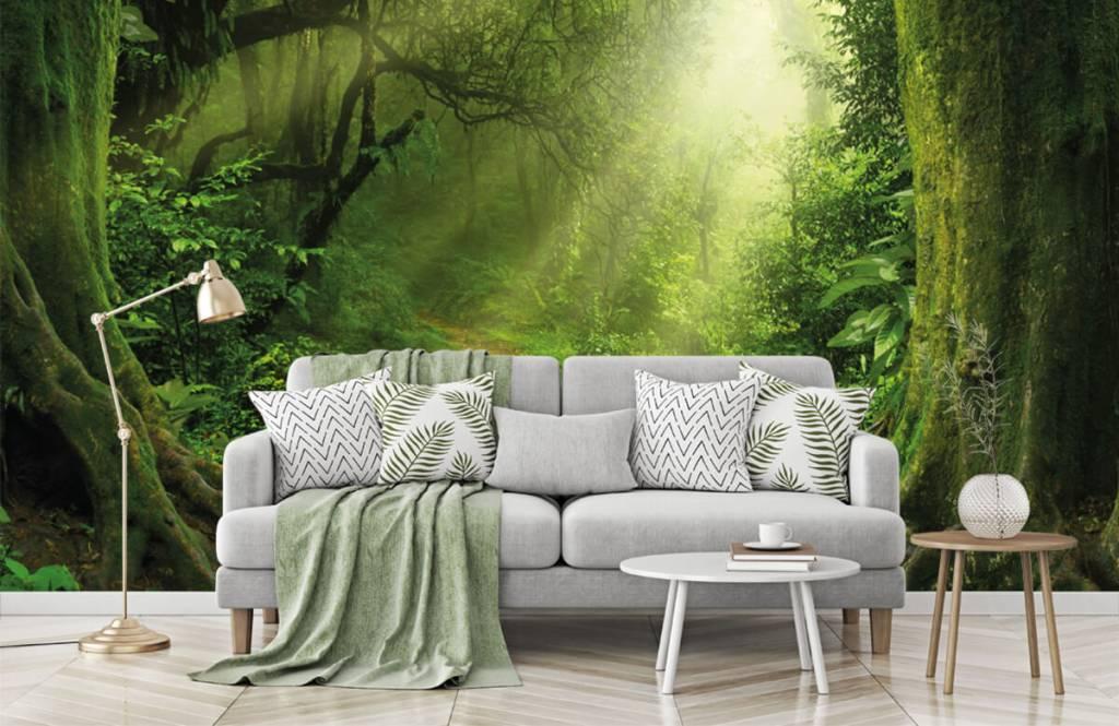 Behang Met Afbeelding.Behang Met Een Jungle Met Zonnestralen Fotobehang