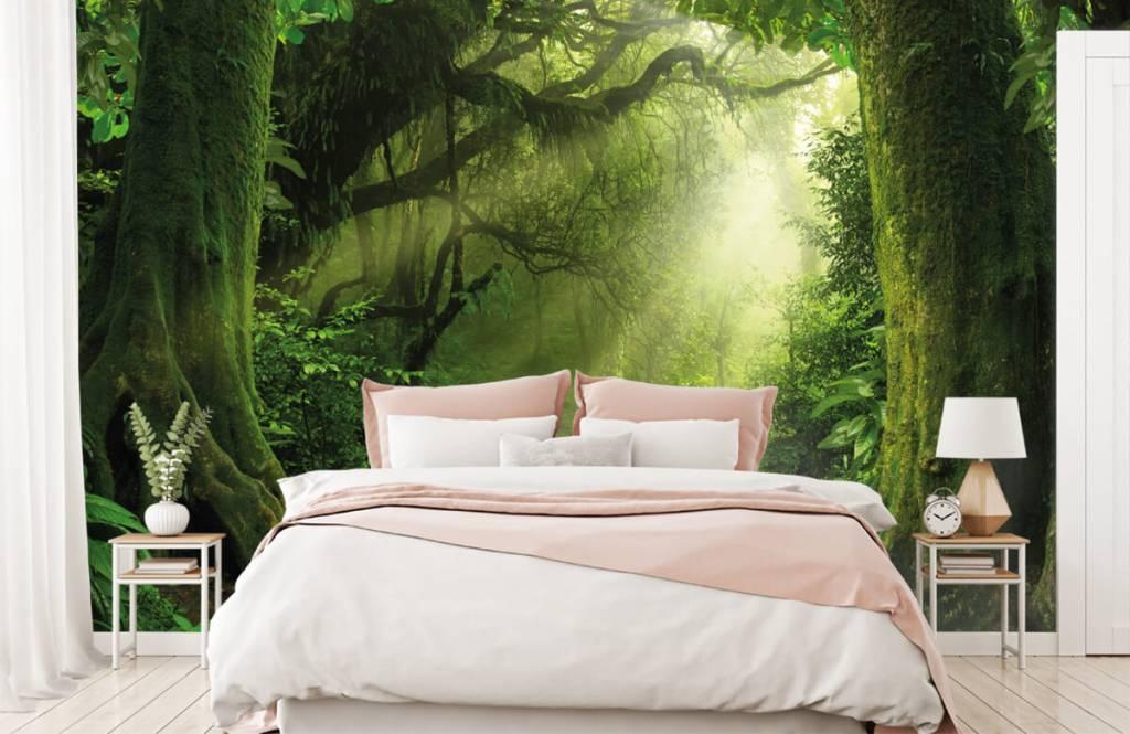 Bomen - Jungle met zonnestralen - Slaapkamer 2