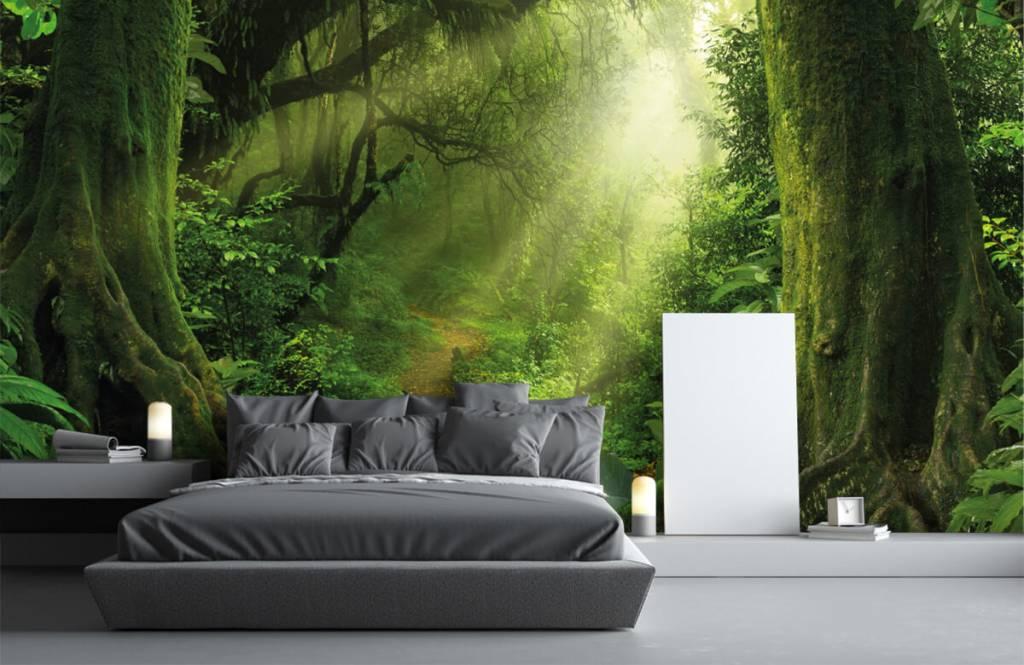 Bomen - Jungle met zonnestralen - Slaapkamer 3