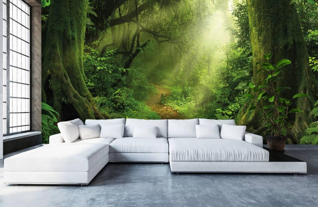Bomen - Jungle met zonnestralen - Slaapkamer 6