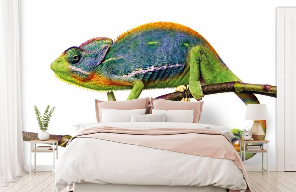 Overige - Kameleon - Kinderkamer 2