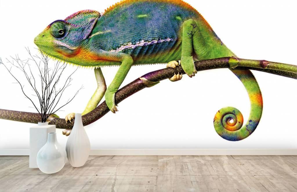 Overige - Kameleon - Kinderkamer 8