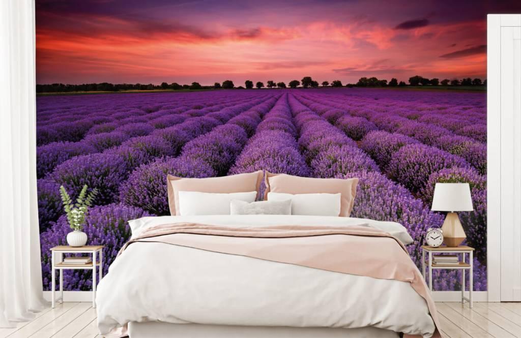 Bloemenvelden - Lavendel veld - Slaapkamer 1