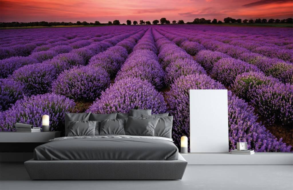 Bloemenvelden - Lavendel veld - Slaapkamer 2
