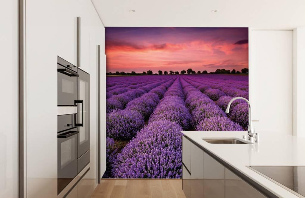 Bloemenvelden - Lavendel veld - Slaapkamer 3
