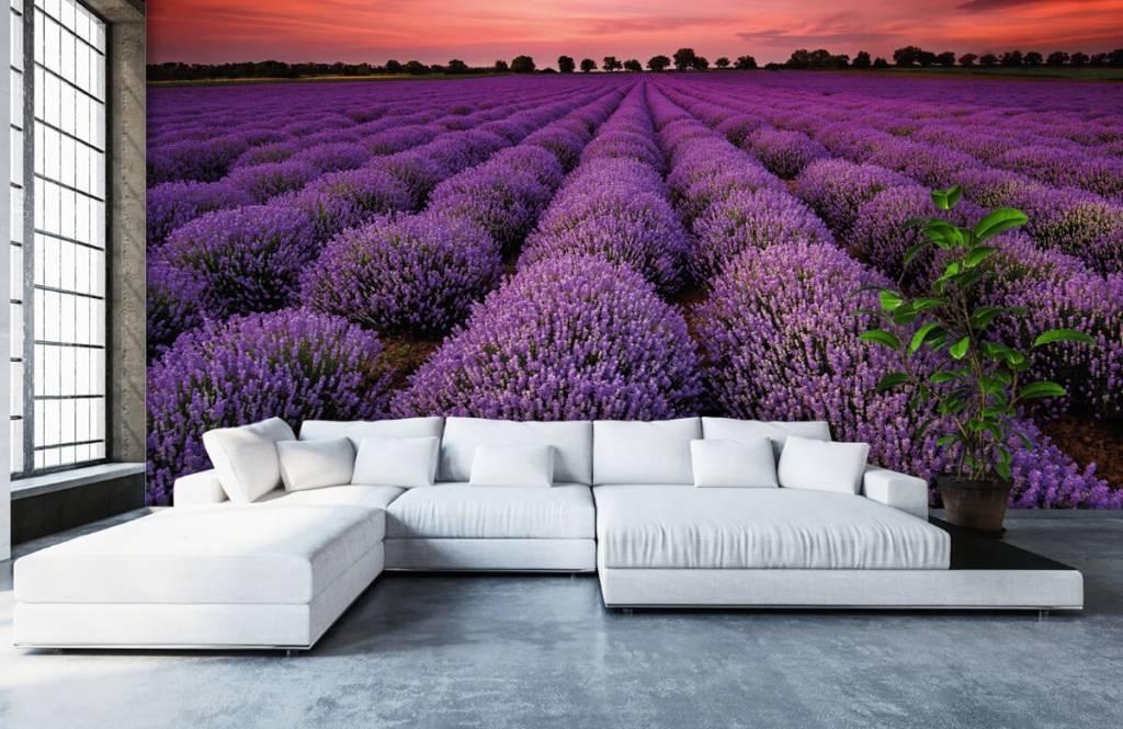 Bloemenvelden - Lavendel veld - Slaapkamer 5