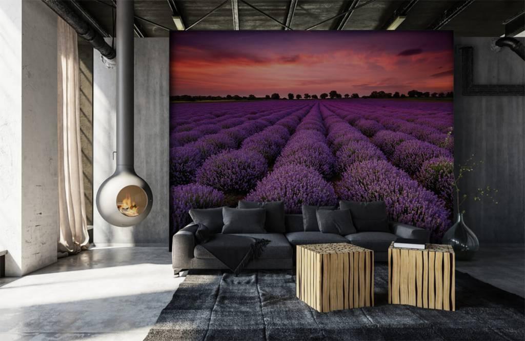 Bloemenvelden - Lavendel veld - Slaapkamer 6
