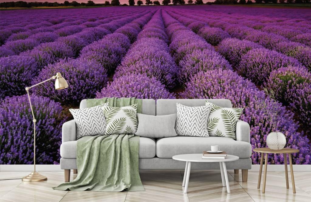 Bloemenvelden - Lavendel veld - Slaapkamer 7