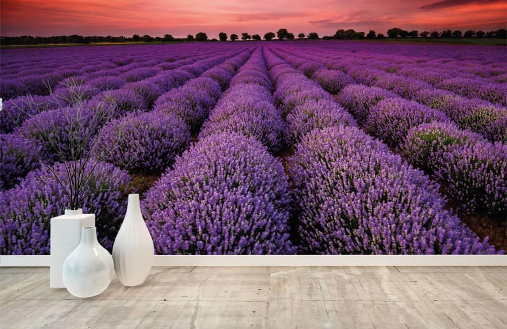 Bloemenvelden - Lavendel veld - Slaapkamer 8
