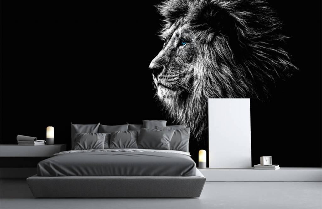 Safaridieren - Leeuw met blauwe ogen - Tienerkamer 3