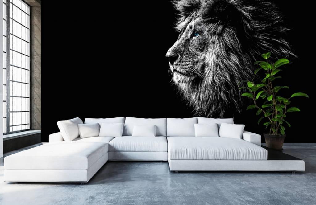 Safaridieren - Leeuw met blauwe ogen - Tienerkamer 6
