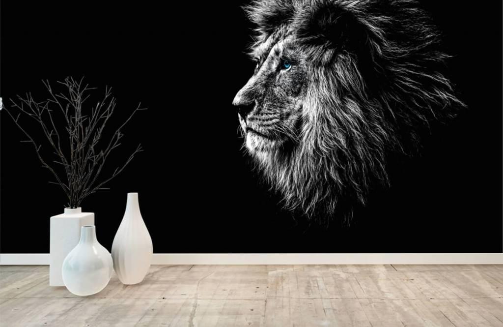 Safaridieren - Leeuw met blauwe ogen - Tienerkamer 8