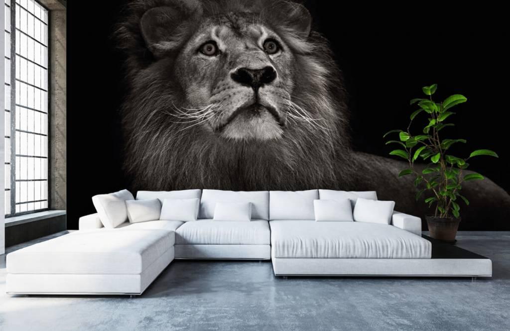 Zwart Wit behang - Leeuw op een zwarte achtergrond - Tienerkamer 1