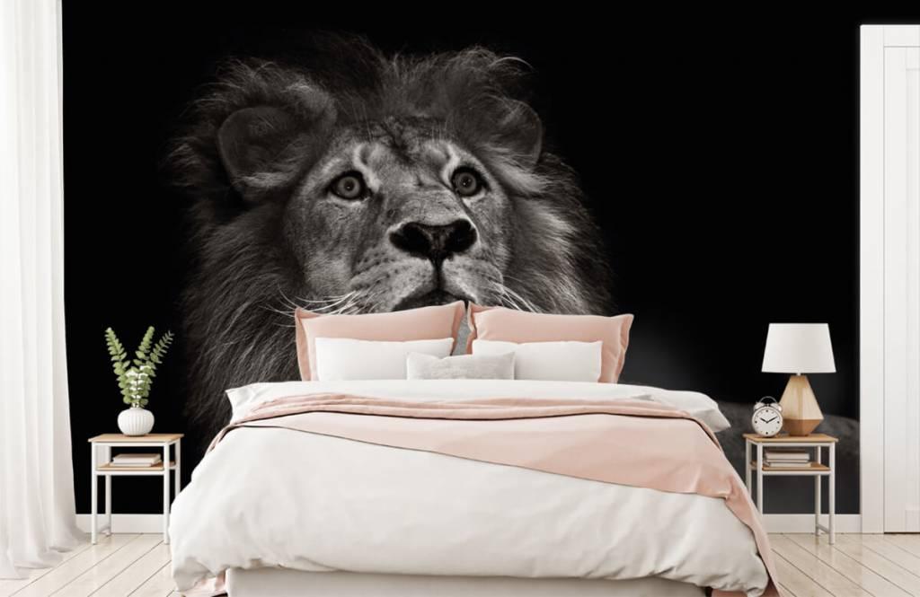Zwart Wit behang - Leeuw op een zwarte achtergrond - Tienerkamer 2