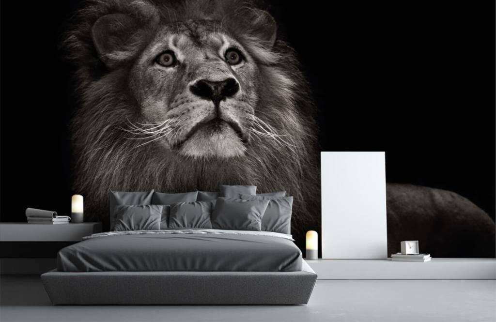 Zwart Wit behang - Leeuw op een zwarte achtergrond - Tienerkamer 3