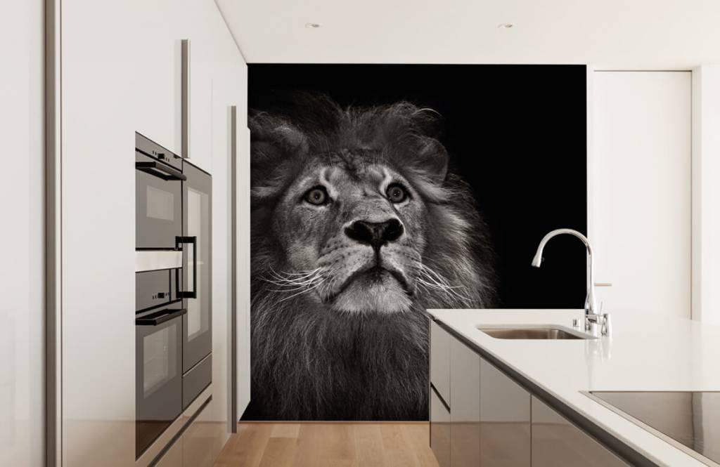 Zwart Wit behang - Leeuw op een zwarte achtergrond - Tienerkamer 4