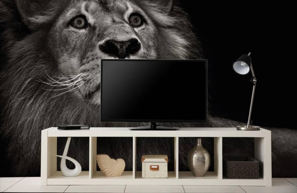 Zwart Wit behang - Leeuw op een zwarte achtergrond - Tienerkamer 5