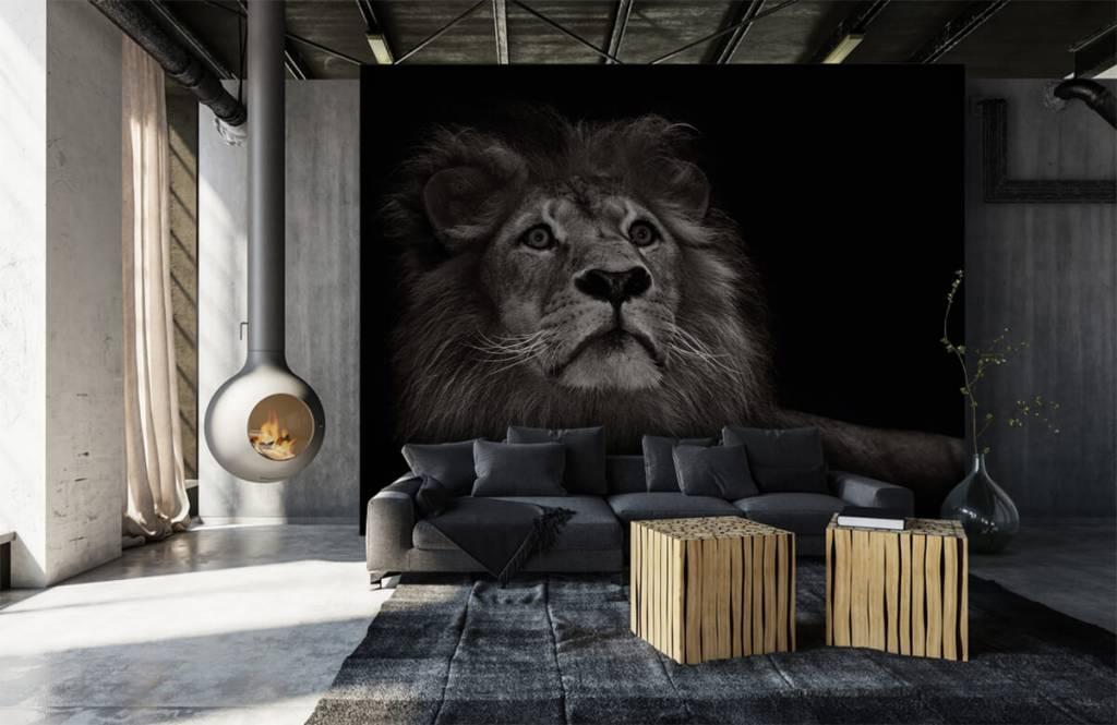 Zwart Wit behang - Leeuw op een zwarte achtergrond - Tienerkamer 6