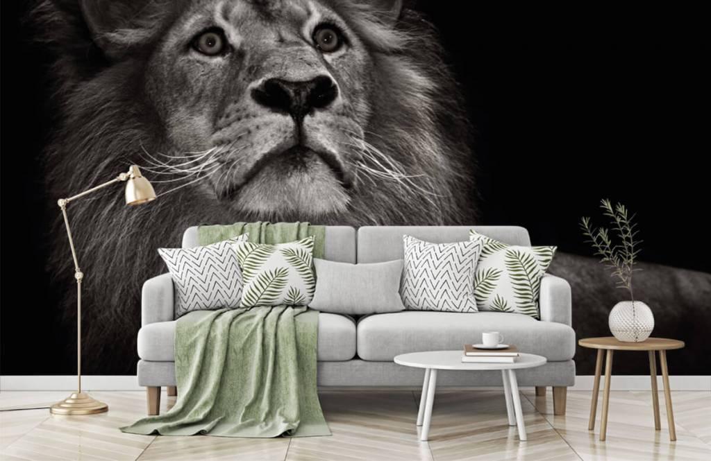 Zwart Wit behang - Leeuw op een zwarte achtergrond - Tienerkamer 7