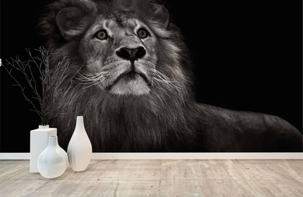 Zwart Wit behang - Leeuw op een zwarte achtergrond - Tienerkamer 8