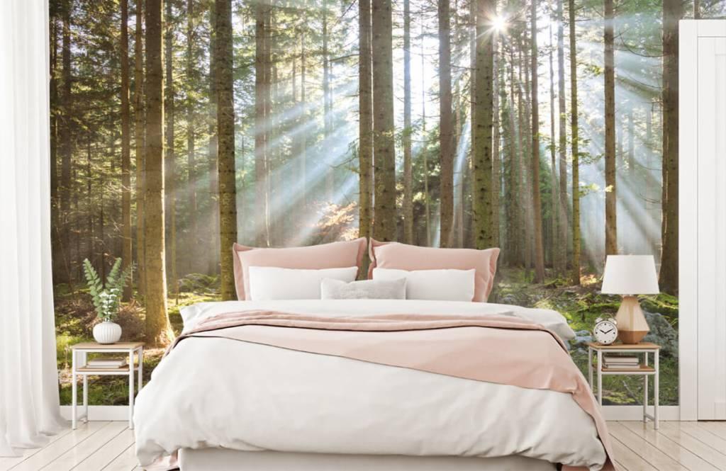 Bos behang - Ochtendzon in het bos - Woonkamer 1