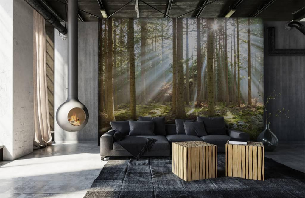 Bos behang - Ochtendzon in het bos - Woonkamer 6