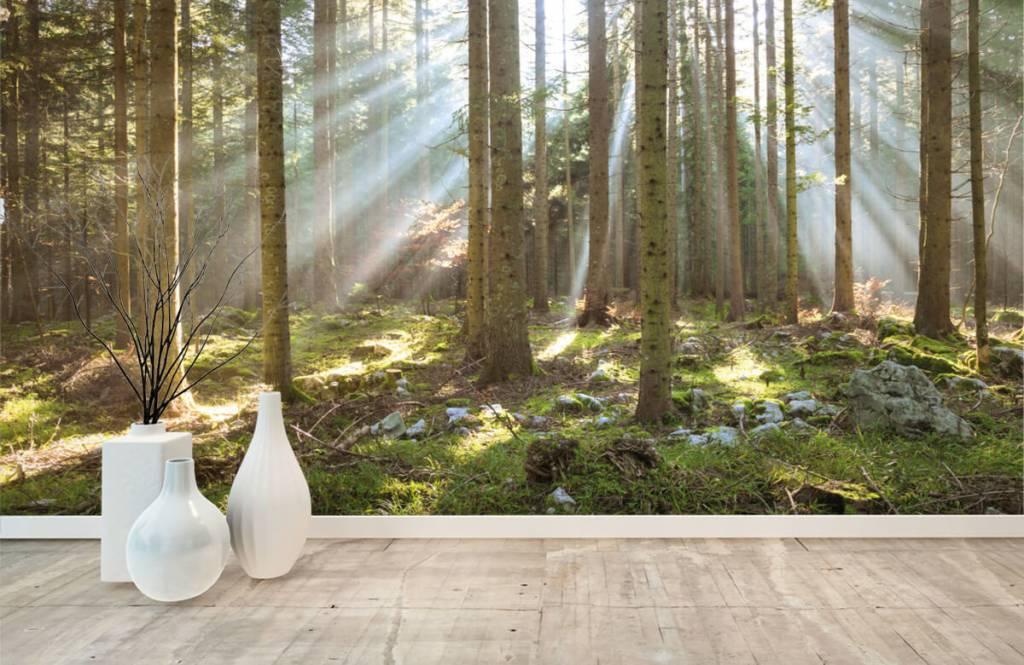 Bos behang - Ochtendzon in het bos - Woonkamer 8