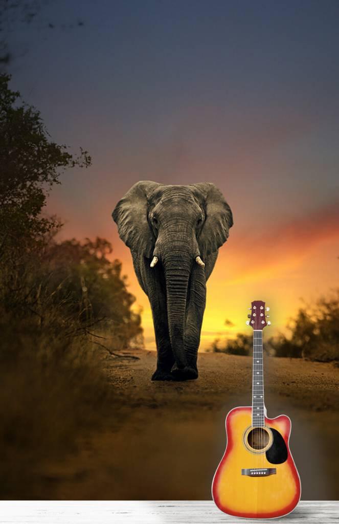 Olifanten - Olifant in de zonsondergang - Tienerkamer 1