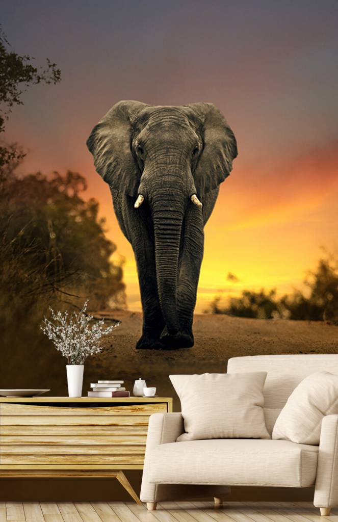 Olifanten - Olifant in de zonsondergang - Tienerkamer 2