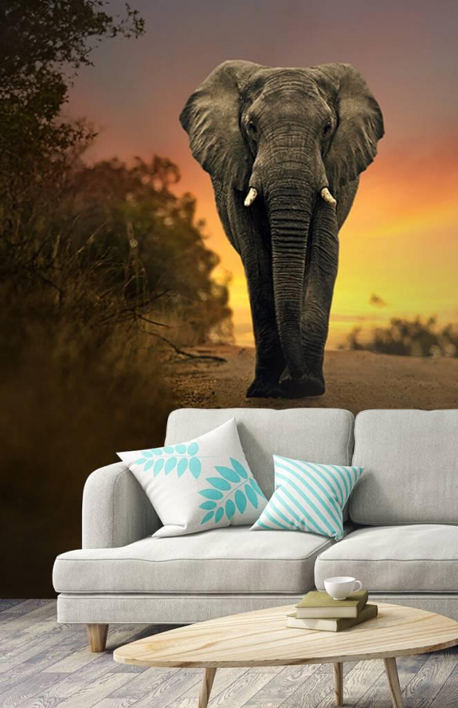 Olifanten - Olifant in de zonsondergang - Tienerkamer 3