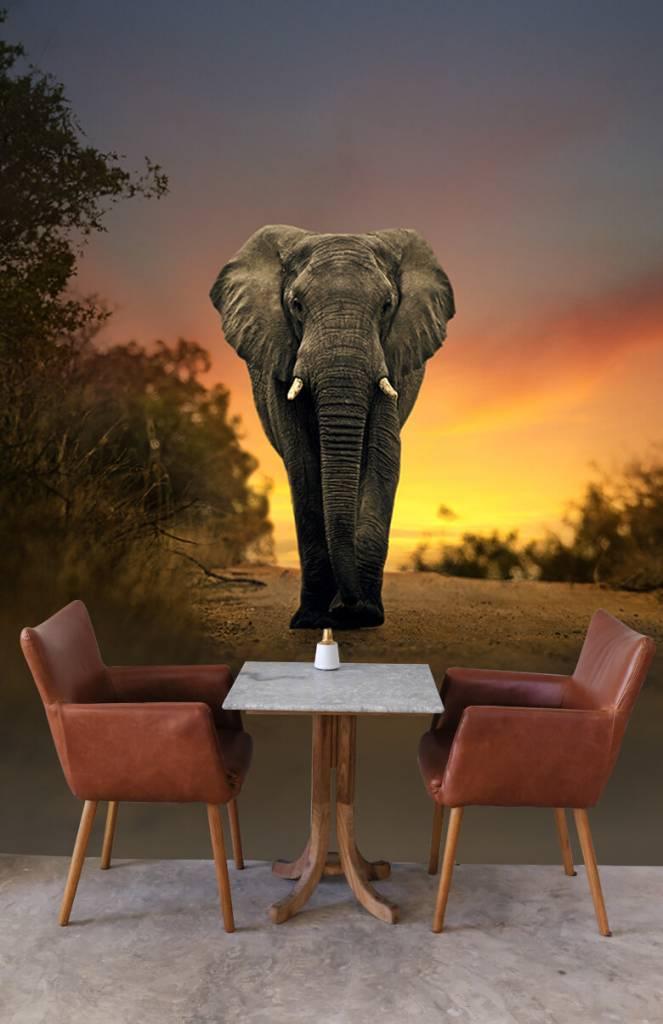 Olifanten - Olifant in de zonsondergang - Tienerkamer 4