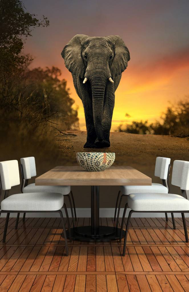 Olifanten - Olifant in de zonsondergang - Tienerkamer 5