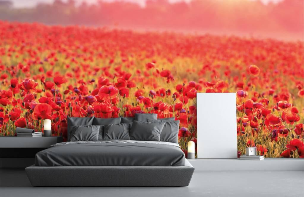 Bloemenvelden - Veld vol klaprozen - Slaapkamer 1