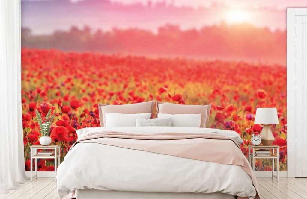 Bloemenvelden - Veld vol klaprozen - Slaapkamer 2