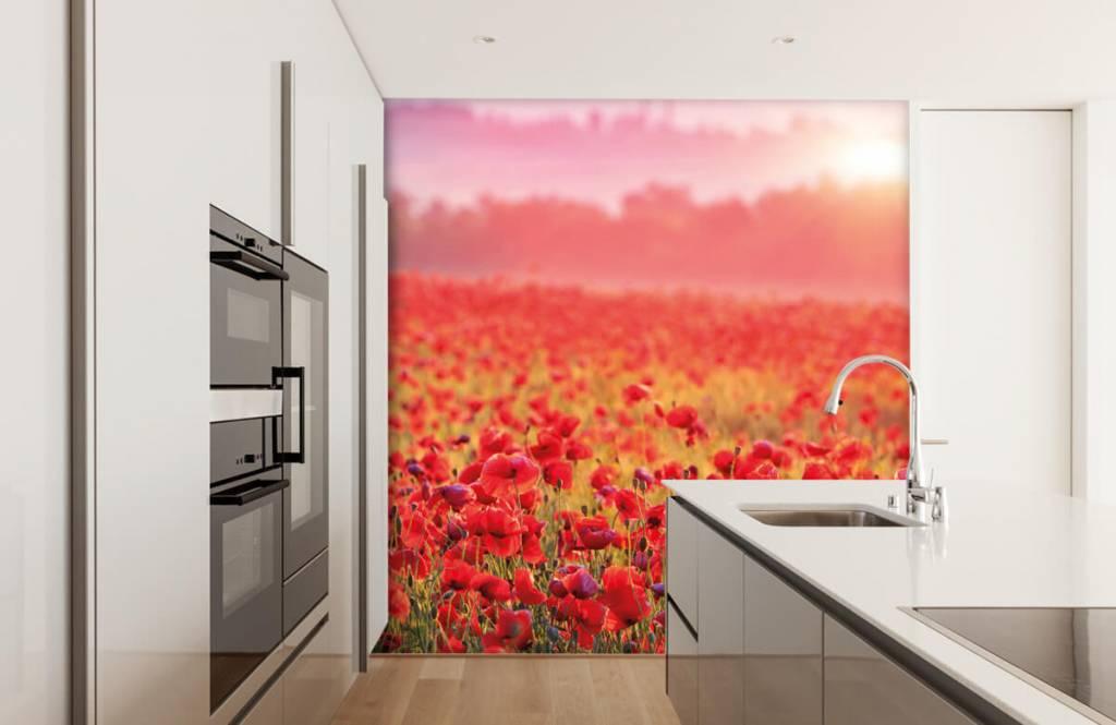 Bloemenvelden - Veld vol klaprozen - Slaapkamer 3