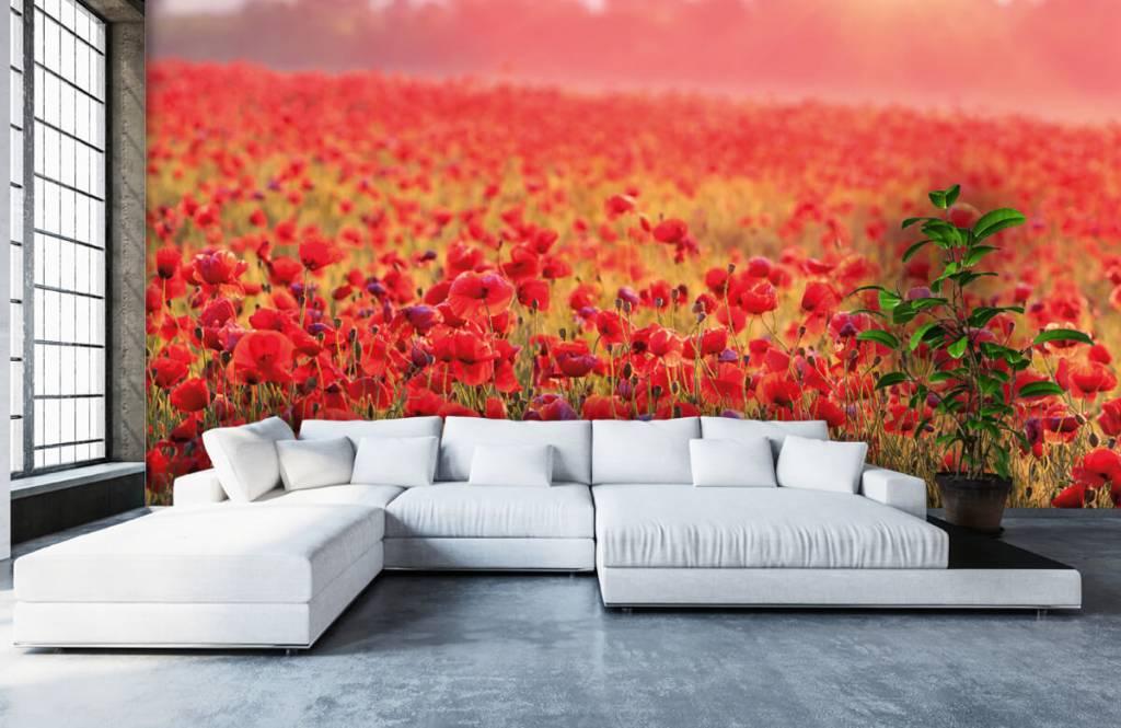 Bloemenvelden - Veld vol klaprozen - Slaapkamer 5