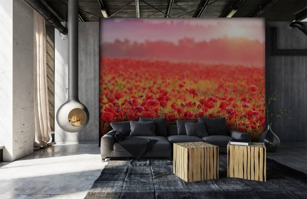 Bloemenvelden - Veld vol klaprozen - Slaapkamer 6
