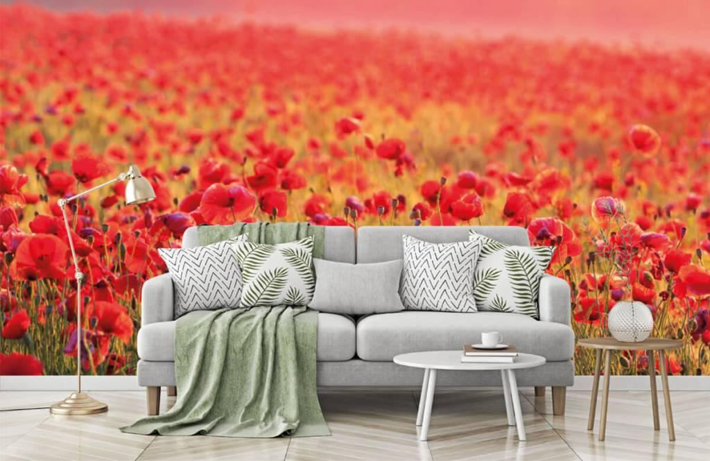 Bloemenvelden - Veld vol klaprozen - Slaapkamer 7
