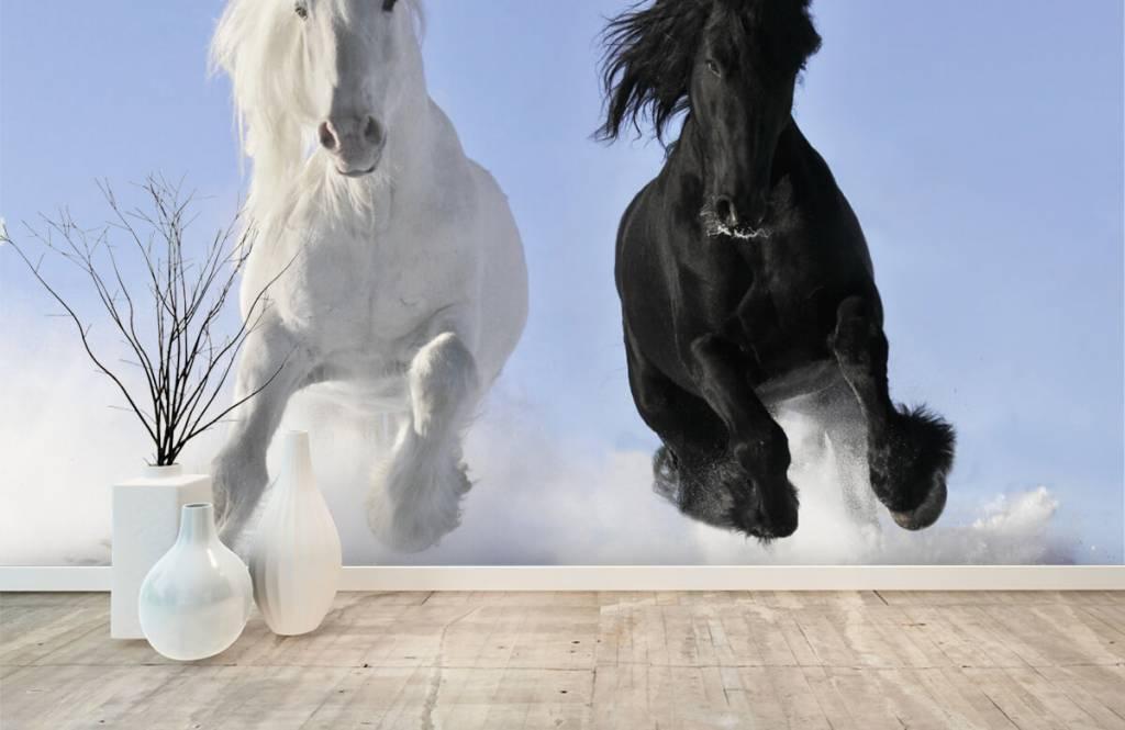 Paarden - Wit en een zwart paard - Tienerkamer 1