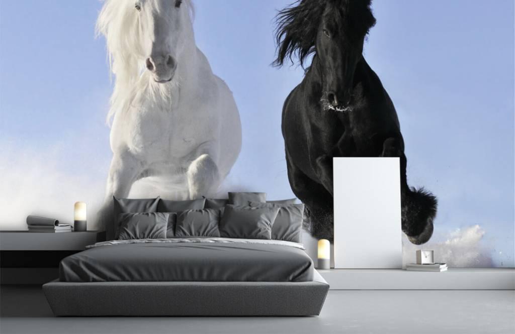 Paarden - Wit en een zwart paard - Tienerkamer 3