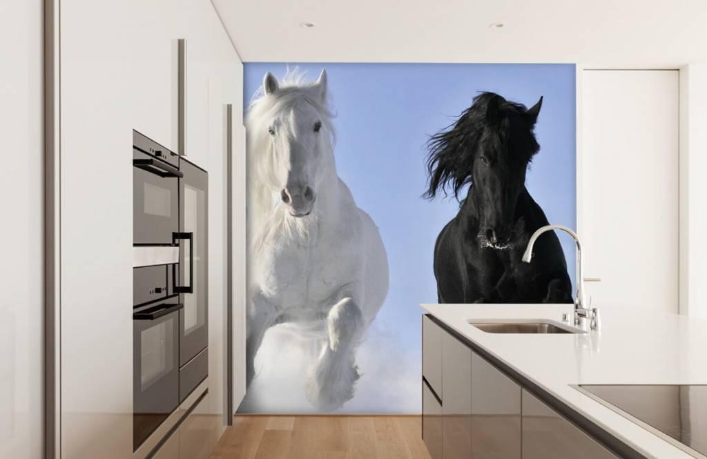 Paarden - Wit en een zwart paard - Tienerkamer 4