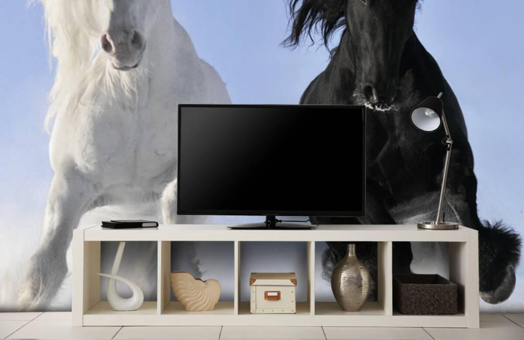 Paarden - Wit en een zwart paard - Tienerkamer 5
