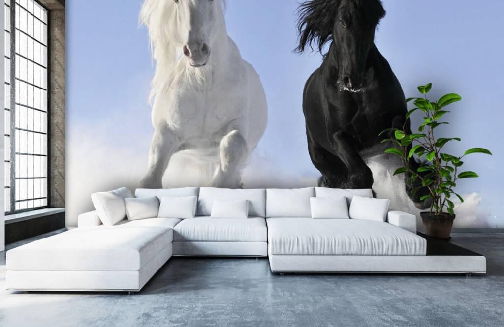 Paarden - Wit en een zwart paard - Tienerkamer 6