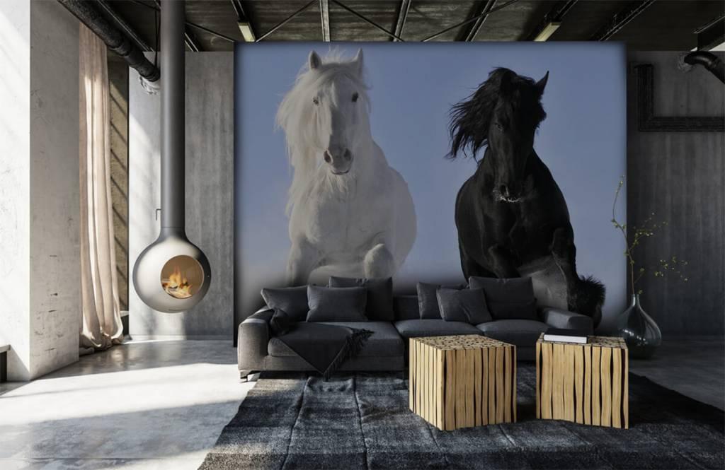 Paarden - Wit en een zwart paard - Tienerkamer 7