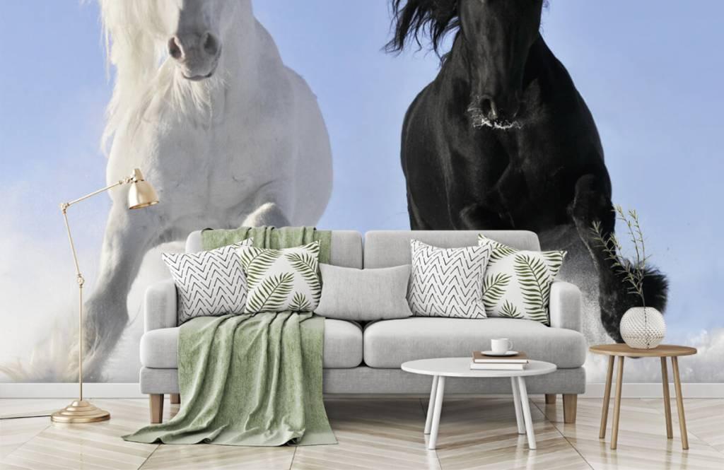 Paarden - Wit en een zwart paard - Tienerkamer 8